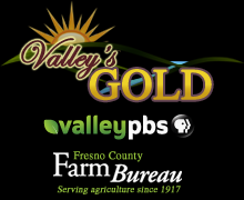 Valley`s Gold