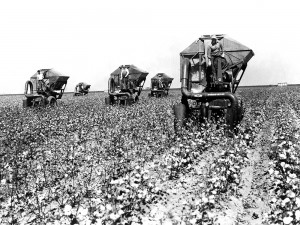 Cotton - MenWithLargeHarvestersInField