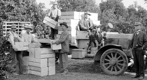 Oranges harvested and loaded at the Reed ranch along the Kings River near Reedley – circa 1917. Pop Laval Collection